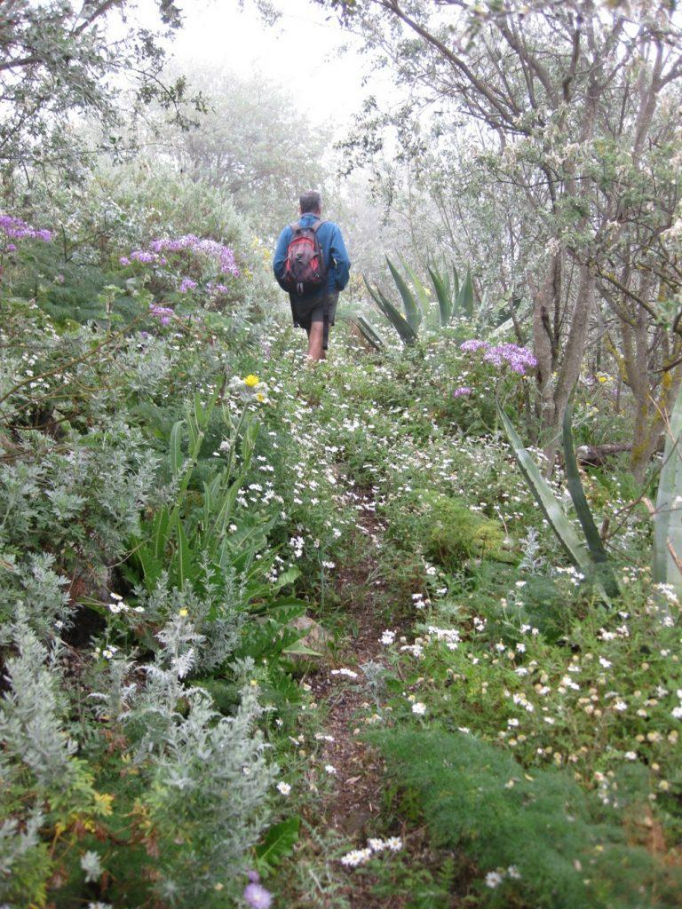 Track and camomile plants