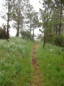 Track through Lomo de Enmedio