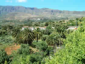 Santa Lucía palm grove, in the region of Ingenio