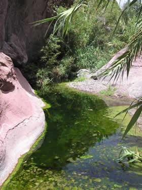 Water in the bottom of Santa Lucía de Tirajana ravine