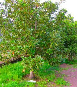 Reserva natural el brezal