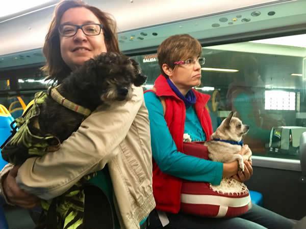 Las mascotas podrán viajar en Global